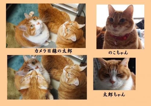 縺ソ縺ェ_convert_20140204220410