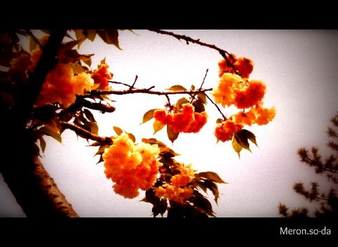 PICT0829_convert_20120502134848.jpg