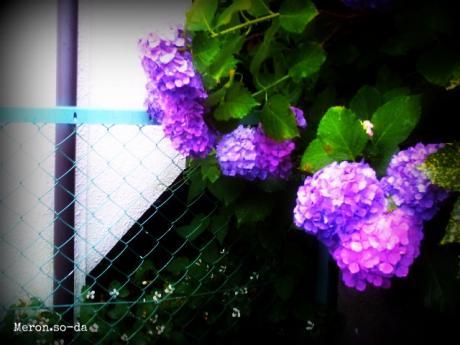 PICT0924_convert_20120616204541.jpg
