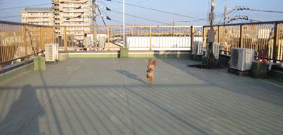 屋上GO!5
