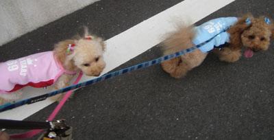 お散歩出勤3