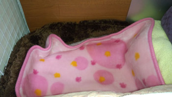 ベッド下秘密基地