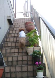 Roseの屋上GO2