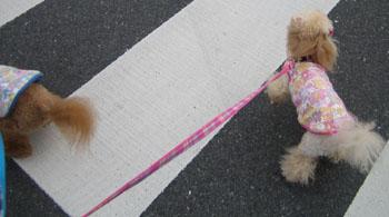 お散歩♪3