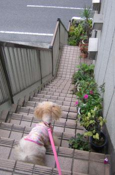 お散歩♪1
