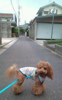 お散歩♪8