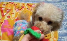 おもちゃ編1