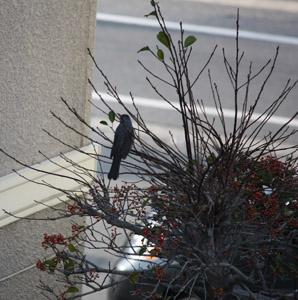 庭に舞い降りる鳥