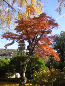 秋の景色6