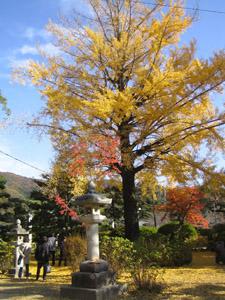秋の景色5