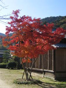 秋の景色8