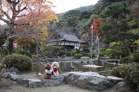 秋の錦帯橋 NonRose2
