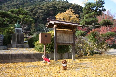 秋の錦帯橋 NonRose1