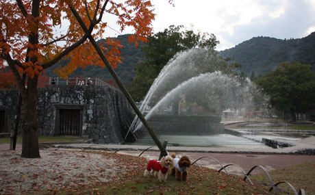 秋の錦帯橋 NonRose0