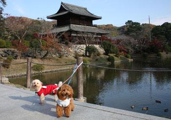 秋の錦帯橋 お堀池
