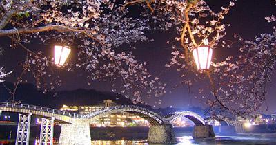 桜と錦帯橋