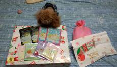 大きなプレゼント7
