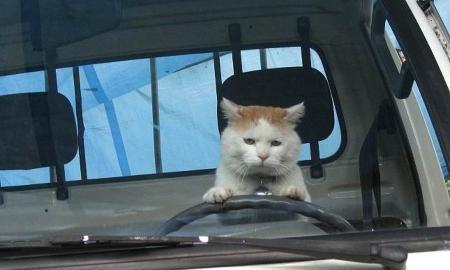 軽トラの運転