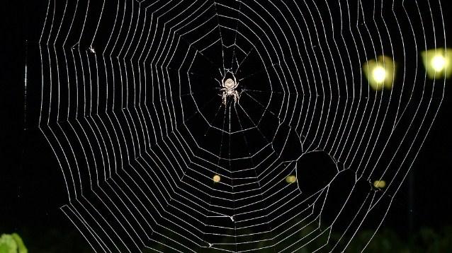 120219spiderweb[1]