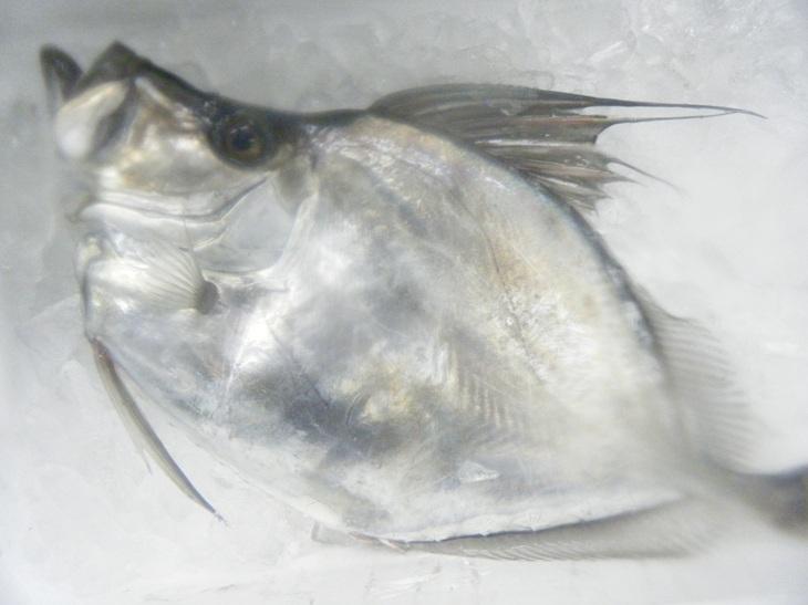 カガミ鯛12.15.jpg