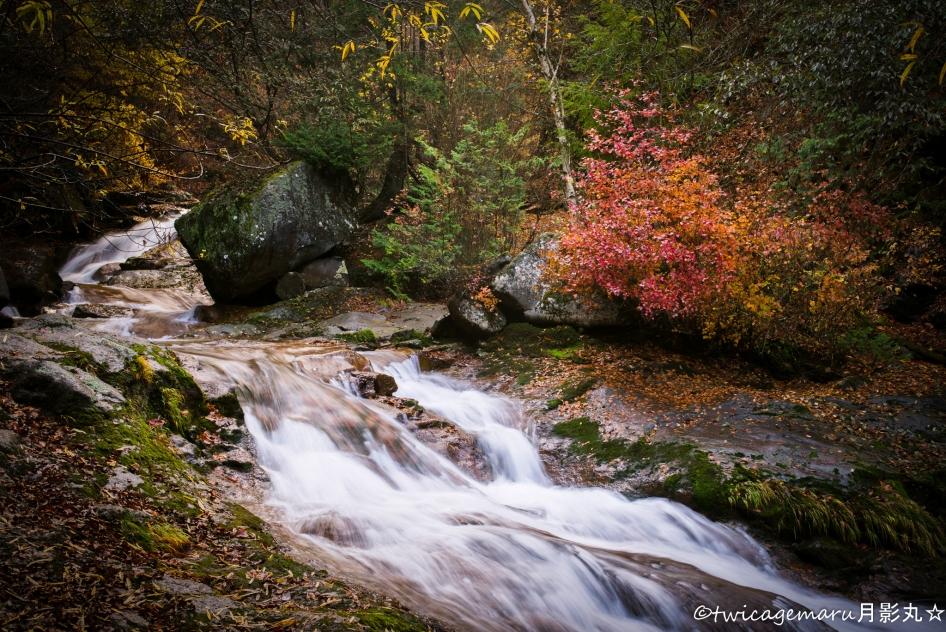 横谷渓谷 紅葉~落葉