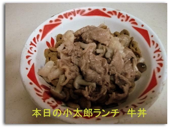 本日の小太郎ランチ牛丼