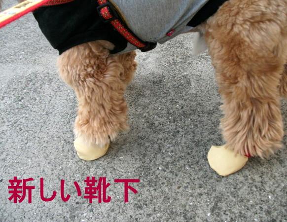 新しい靴下