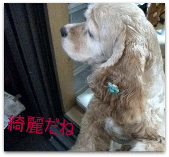 虹 010と小太郎