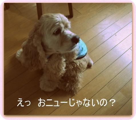 2小太郎君です