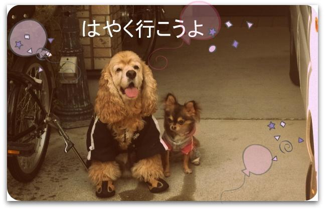 岸和田祭り 054-001小太郎わかめ