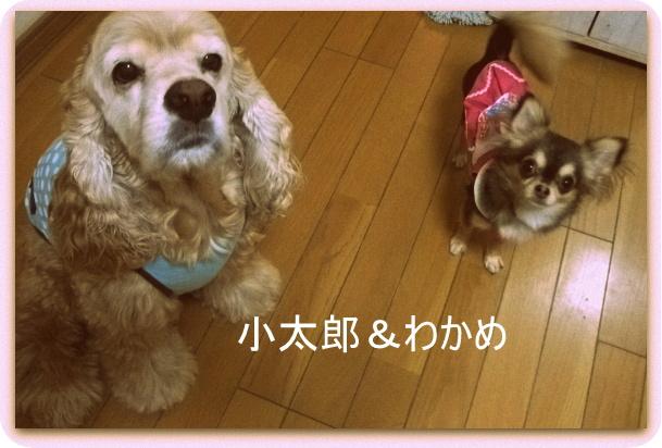 小太郎とわかめ 003