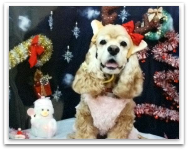 クリスマス小太郎