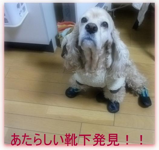 靴下 みっけ