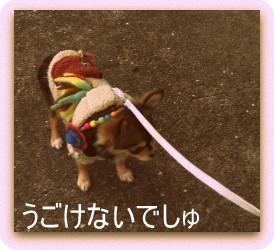 わかめの散歩2