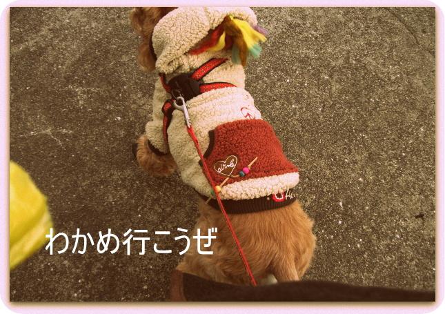 小太郎の散歩