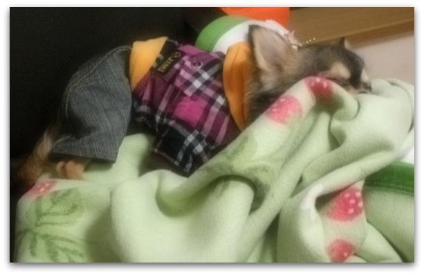 わかめおやすみ3
