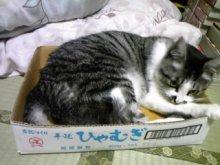 ポケさんの食いしん坊日記-120805_190418_ed.jpg