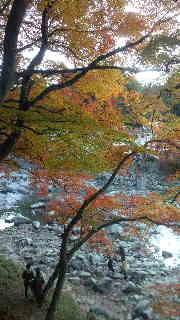 ポケさんの食いしん坊日記-2012111816000000.jpg