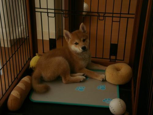 てつ子犬1