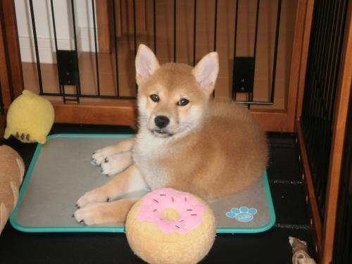 てつ子犬2