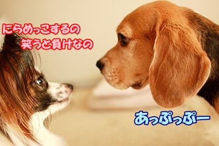 1_20120917215140.jpg