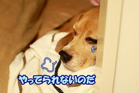 1_20120919202146.jpg