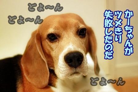 1_20120926201533.jpg