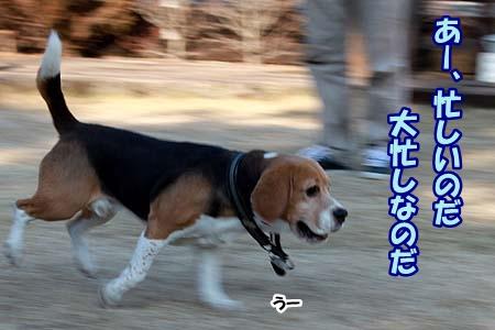 1_20130114232426.jpg