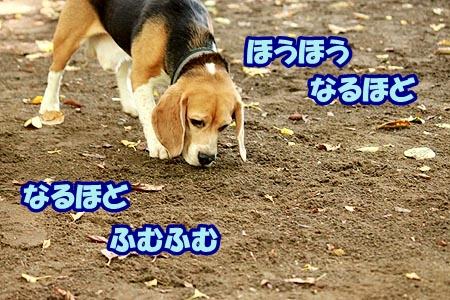 2_20120917214041.jpg
