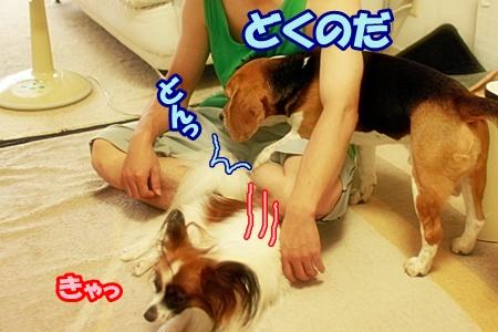 2_20120925191530.jpg
