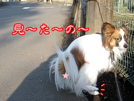 2_20121124185742.jpg