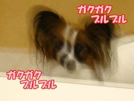 3_20120430001248.jpg