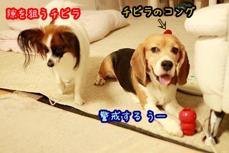 3_20120814210135.jpg