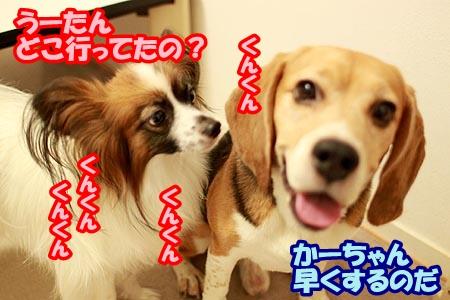 3_20120830205634.jpg